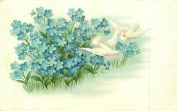 blue forget-me-nots left, two white doves in flight to right