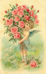 cupid carries huge bunch of pink roses