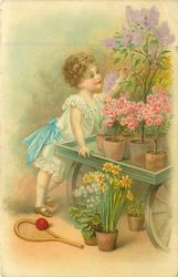 girl leans right reaching up to a lilac in pot on table, other flowers in pots, ball & raquet on ground