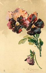 maroon and peach pansies, two opened, stems right, single mauve bud below on right facing down