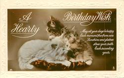 A HEARTY BIRTHDAY WISH   three cats on cushion