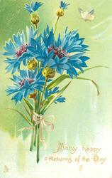 MANY HAPPY RETURNS OF THE DAY  blue cornflowers, green background