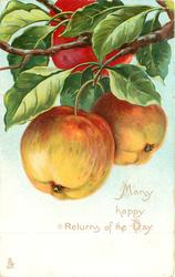 MANY HAPPY RETURNS OF THE DAY  two apples hanging, another above touching top of card