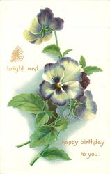 A BRIGHT AND HAPPY BIRTHDAY TO YOU  pansies