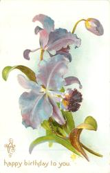 A HAPPY BIRTHDAY TO YOU  blue orchid