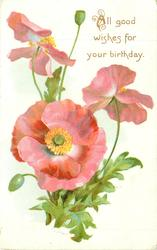 ALL GOOD WISHES FOR YOUR BIRTHDAY  pink poppies