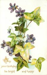 MAY YOUR BIRTHDAY BE BRIGHT AND HAPPY  violets & ivy leaves