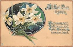 ALL EASTER PEACE BE YOURS narcissi