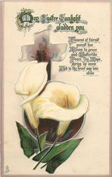 MAY EASTER SUNLIGHT GLADDEN YOU  calla lilies
