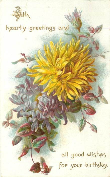 WITH HEARTY GREETINGS AND ALL GOOD WISHES FOR YOUR BIRTHDAY  chrysanthemums