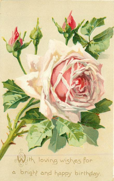 WITH LOVING WISHES FOR A BRIGHT AND HAPPY BIRTHDAY  pink rose, three buds