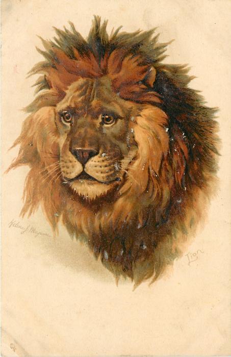 LION  faces forward left