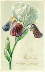 TO WISH YOU A HAPPY BIRTHDAY  iris