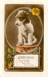 A MERRY BIRTHDAY  seated terrier