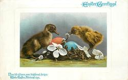 EASTER GREETINGS  chick & duckling, eggs