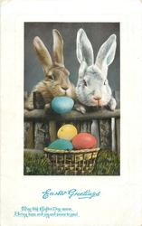 EASTER GREETINGS  2 rabbits look over low fence, 3 EASTER eggs in basket, another under rabbit's nose