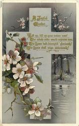 A JOYFUL EASTER  blossom