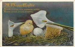 A HAPPY EASTER  chick, calla lilies, egg