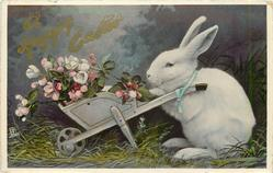 A HAPPY EASTER  rabbit with wheel-barrow full of wild roses