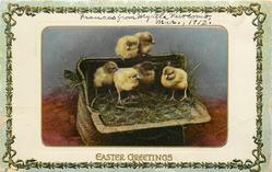 EASTER GREETINGS  six chicks in wicker basket with grass