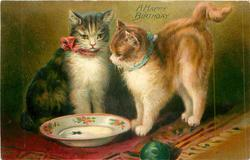 A HAPPY BIRTHDAY  two cats look at empty bowl, ball front centre