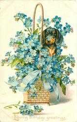 LOVING BIRTHDAY GREETINGS dachshund peeks out from large basket of blue forget-me-nots
