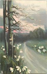 A JOYFUL EASTER  road with two trees left, snowdrops