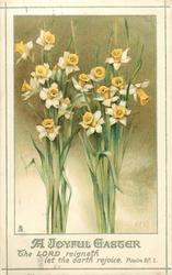 A JOYOUS EASTER, daffodis