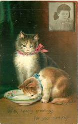 WITH HEARTY GREETINGS FOR YOUR BIRTHDAY cat licks milk from saucer, another cat sits behind observing