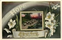HOPE, A HAPPY EASTER  sheep, narcissi