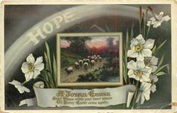 HOPE, A JOYFUL EASTER  sheep, narcissi