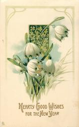 HEARTY GOOD WISHES FOR THE NEW YEAR  large snowdrops, clover behind