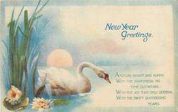 NEW YEAR GREETINGS  swan on water