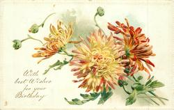 WITH BEST WISHES FOR YOUR BIRTHDAY chrysanthemums
