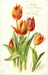 WITH BEST WISHES FOR YOUR BIRTHDAY  red/orange tulips