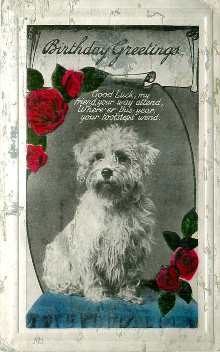 BIRTHDAY GREETINGS   terrier (?dandy dinmont)