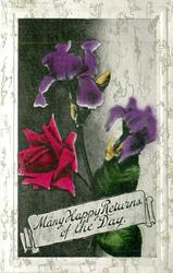 MANY HAPPY RETURNS OF THE DAY  red rose & two purple iris