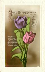 MANY HAPPY RETURNS OF THE DAY, purple & pink tulips