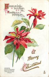 A MERRY CHRISTMAS, POINSETTIA & description bottom/left