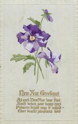 NEW YEAR GREETINGS  pansies