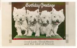 BIRTHDAY GREETINGS four white scotties