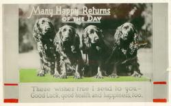 MANY HAPPY RETURNS OF THE DAY, THESE WISHES TRUE I SEND TO YOU-GOOD LUCK, GOOD HEALTH AND HAPPINESS TOO  four spaniels