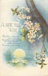 A NEW YEAR WISH  rising sun, blossom