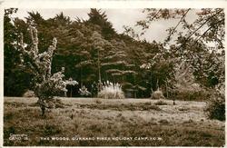 THE WOODS. GURNARD PINES HOLIDAY CAMP, I.O.W.