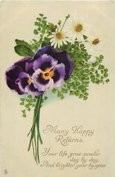 MANY HAPPY RETURNS  pansies, daisies & maidenhair fern