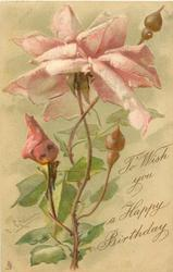 TO WISH YOU A HAPPY BIRTHDAY  pink roses