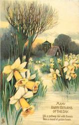 MANY HAPPY RETURNS OF THE DAY  stream, church, daffodils