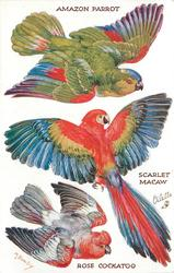 AMAZON PARROT, SCARLET MACAW, ROSE COCKATOO