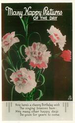 MANY HAPPY RETURNS OF THE DAY  pink & red carnations