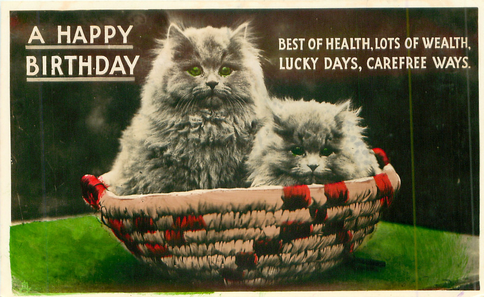 a happy birthday two white persian cats in basket